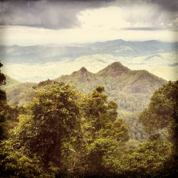 Queensland rainforest in the Gold Coast hinterland near Mount Warning