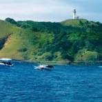 Byron Bay Dolphins1